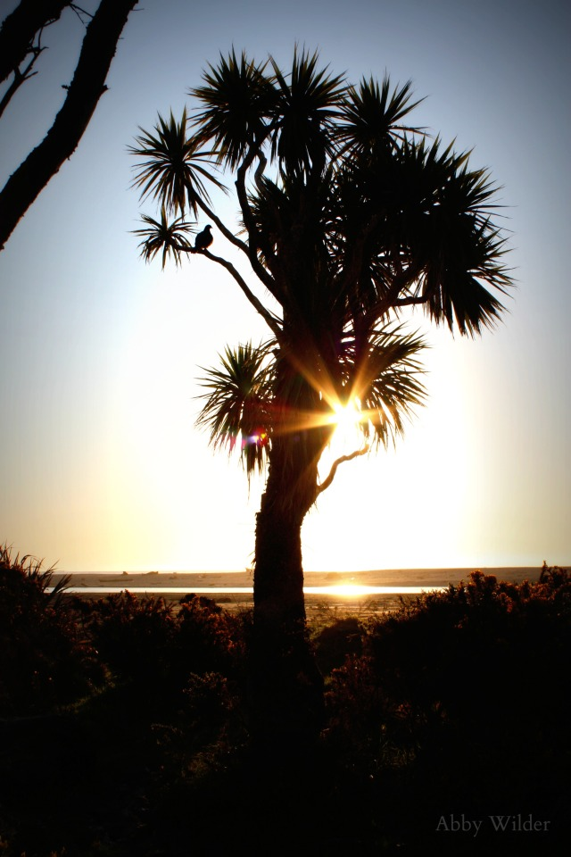Cabbage Tree edited