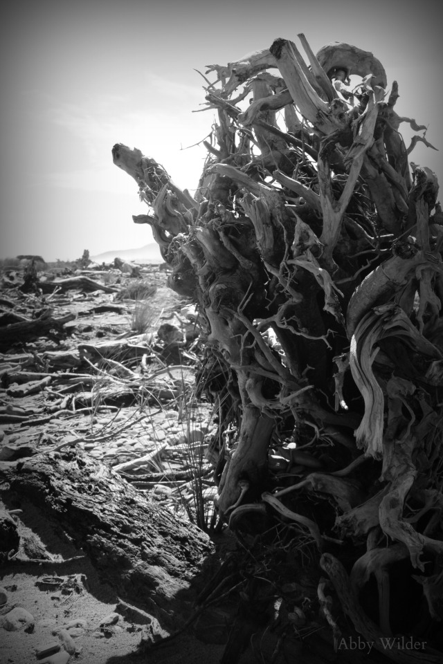 Desolate Wilderness 1 edited